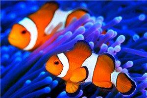 best waterproof plastic coated neodymium magnets for aquarium